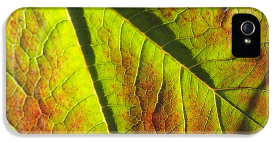Leaves IPhone 5 Case featuring the photograph Green Days Past by Trish Hale