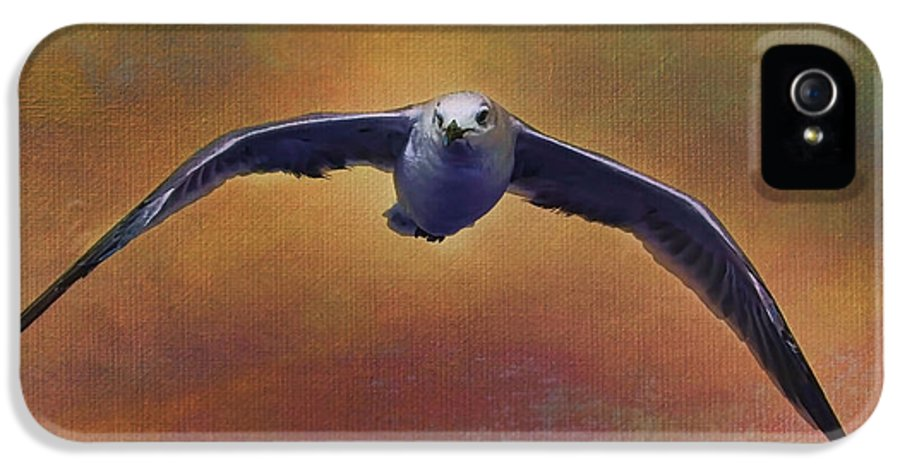 Seagull IPhone 5 Case featuring the photograph Heading Home by Deborah Benoit