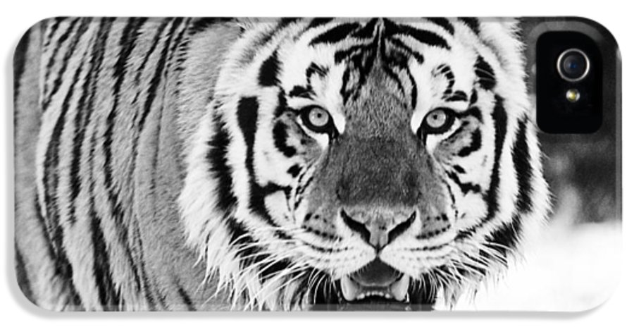 Tiger IPhone 5 Case featuring the photograph His Majesty by Scott Pellegrin