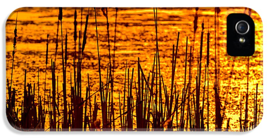 Horicon IPhone 5 Case featuring the photograph Horicon Cattail Marsh Wisconsin by Steve Gadomski