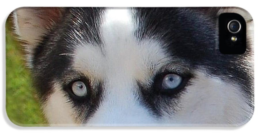 Dog IPhone 5 Case featuring the photograph Husky Birthday by Aimee L Maher Photography and Art Visit ALMGallerydotcom