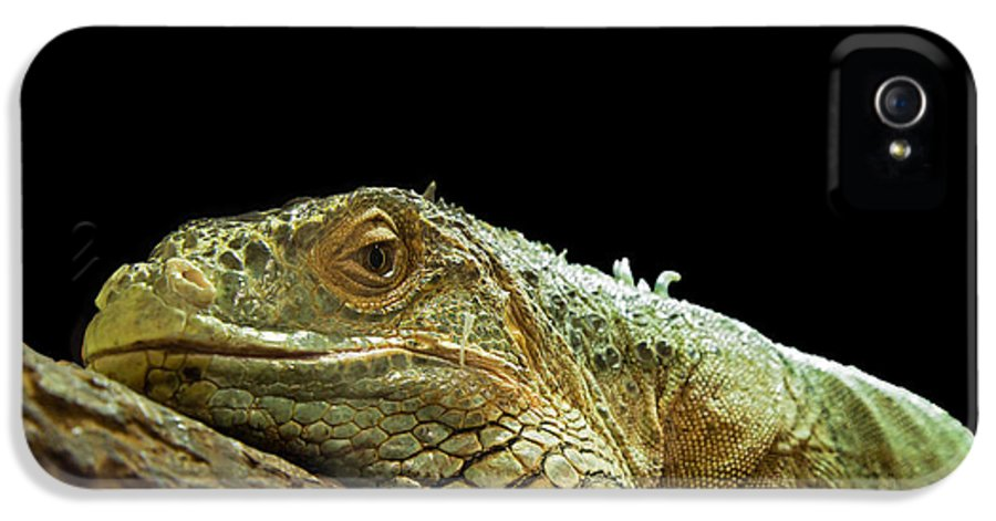 Animal IPhone 5 Case featuring the photograph Iguana by Jane Rix