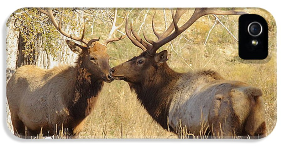 Animal IPhone 5 Case featuring the photograph Junior Meets Bull Elk by Robert Frederick