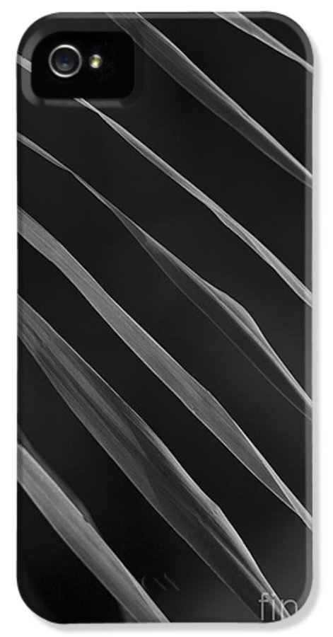 Nature IPhone 5 Case featuring the photograph Just Grass Bw by Heiko Koehrer-Wagner