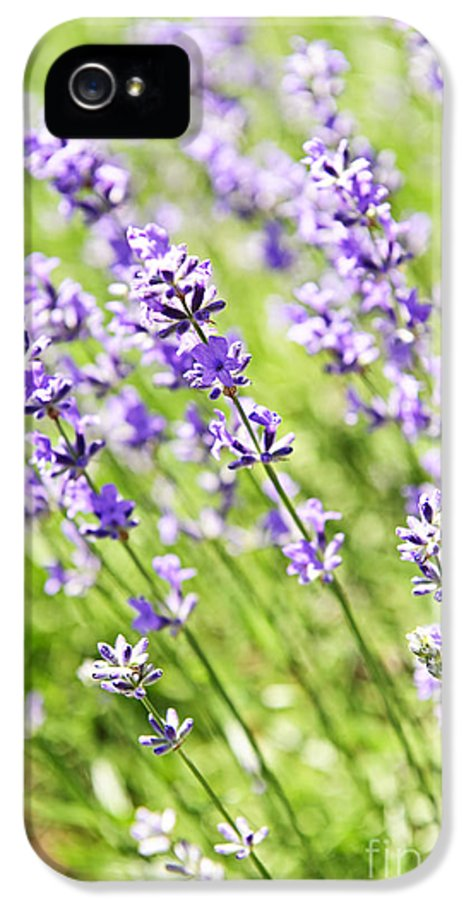 Lavender IPhone 5 Case featuring the photograph Lavender In Sunshine by Elena Elisseeva