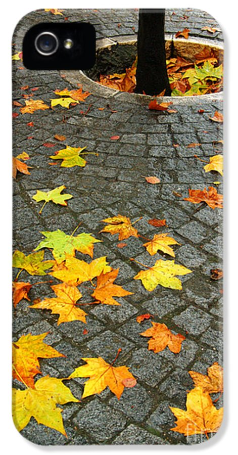 Autumn IPhone 5 Case featuring the photograph Leafs In Ground by Carlos Caetano