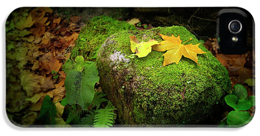 Autumn IPhone 5 Case featuring the photograph Leafs On Rock by Carlos Caetano