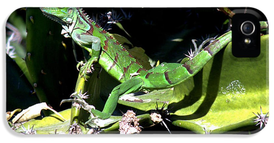 Lizards IPhone 5 Case featuring the photograph Leapin Lizards by Karen Wiles