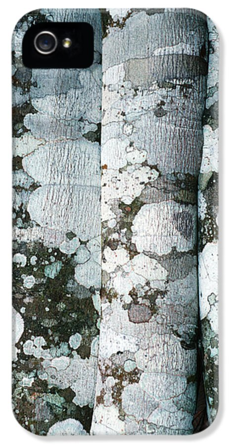 Lichen IPhone 5 Case featuring the photograph Lichen On Cinnamon Trees by Georgette Douwma