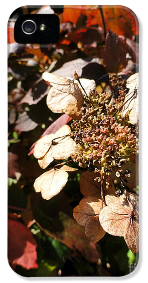 Leaves IPhone 5 Case featuring the photograph Light As Paper by Trish Hale