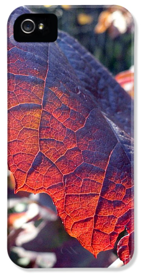 Leaves IPhone 5 Case featuring the photograph Light Of The Lifeblood by Trish Hale