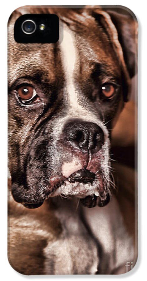 Boxer IPhone 5 Case featuring the photograph Meet Rocky by Deborah Benoit