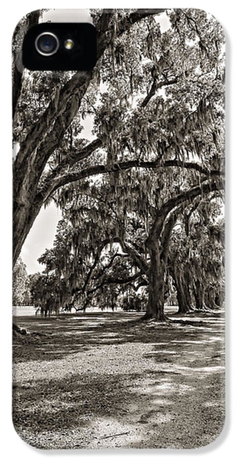 Evergreen Plantation IPhone 5 Case featuring the photograph Memory Lane Monochrome by Steve Harrington
