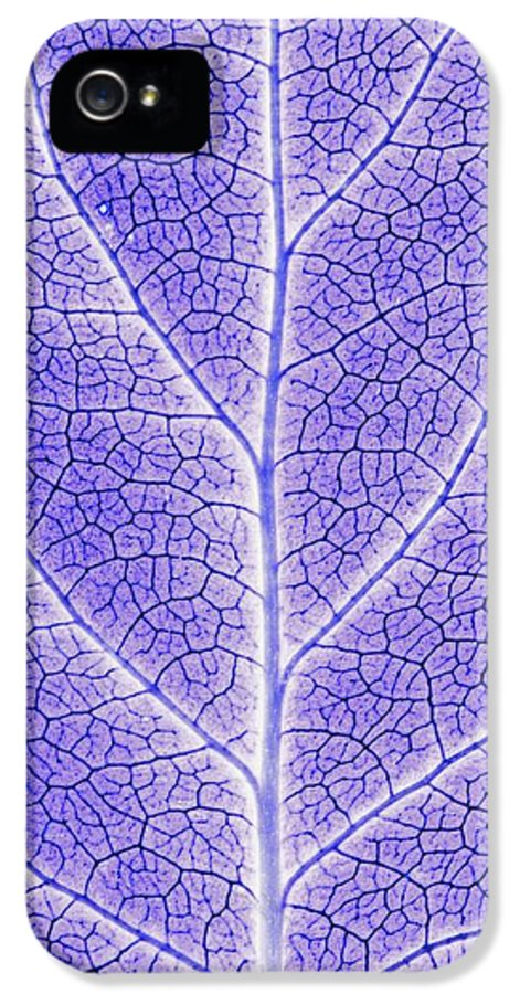 Abstracts IPhone 5 Case featuring the photograph Monotone Close Up Of Leaf by Sean White