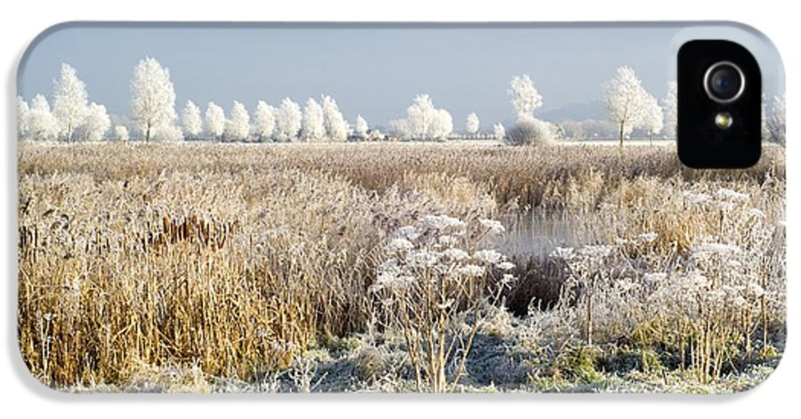Willow IPhone 5 Case featuring the photograph Morning Frost by Duncan Shaw