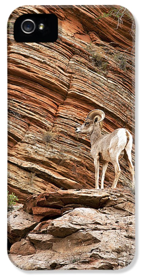 America IPhone 5 Case featuring the photograph Mountain Goat by Jane Rix