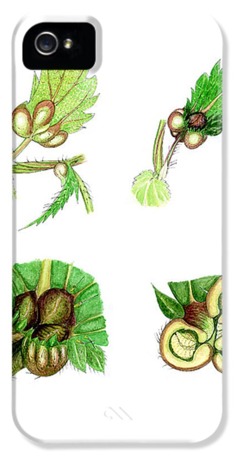Stinging Nettle IPhone 5 Case featuring the photograph Nettle Leaf Galls by Dr Keith Wheeler