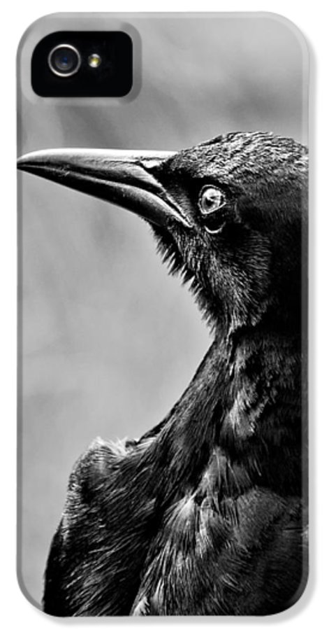 Monotone IPhone 5 Case featuring the photograph On Alert - Bw by Christopher Holmes