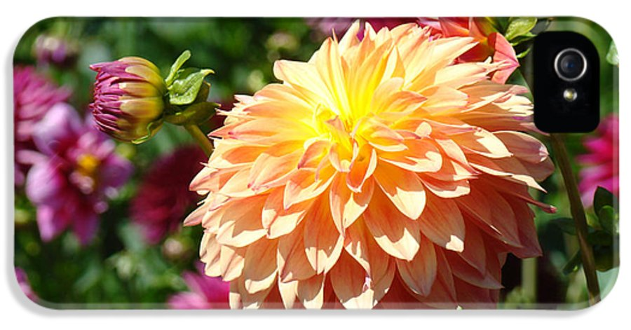 Flowers IPhone 5 Case featuring the photograph Orange Dahlia Flower Floral Fine Art Photography by Baslee Troutman