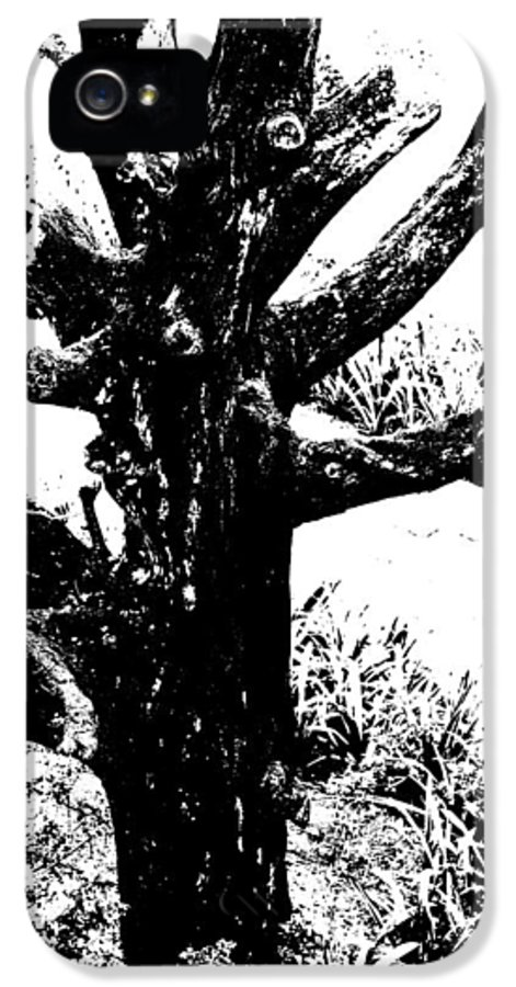 Generic IPhone 5 Case featuring the photograph Ornamental Dead Tree By The Path by Kantilal Patel