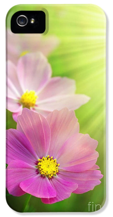Agriculture IPhone 5 Case featuring the photograph Pink Spring by Carlos Caetano
