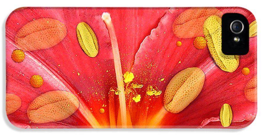 Flower IPhone 5 Case featuring the photograph Pollen And Flower by Hannah Gal