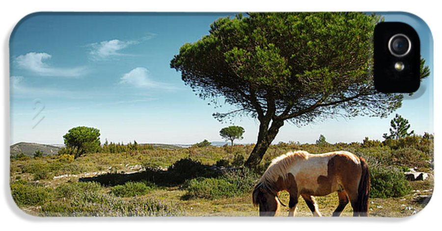 Animal IPhone 5 Case featuring the photograph Pony Pasturing by Carlos Caetano