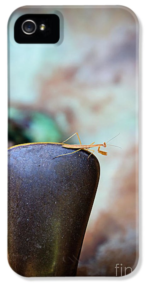 Praying Mantis IPhone 5 Case featuring the photograph Praying For Water 1 by Andee Design