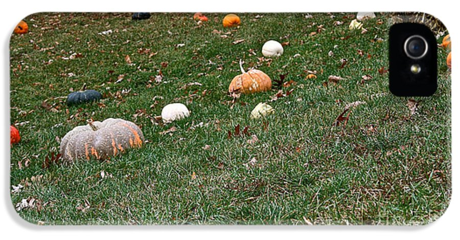 Outdoors IPhone 5 Case featuring the photograph Pumpkins by Susan Herber