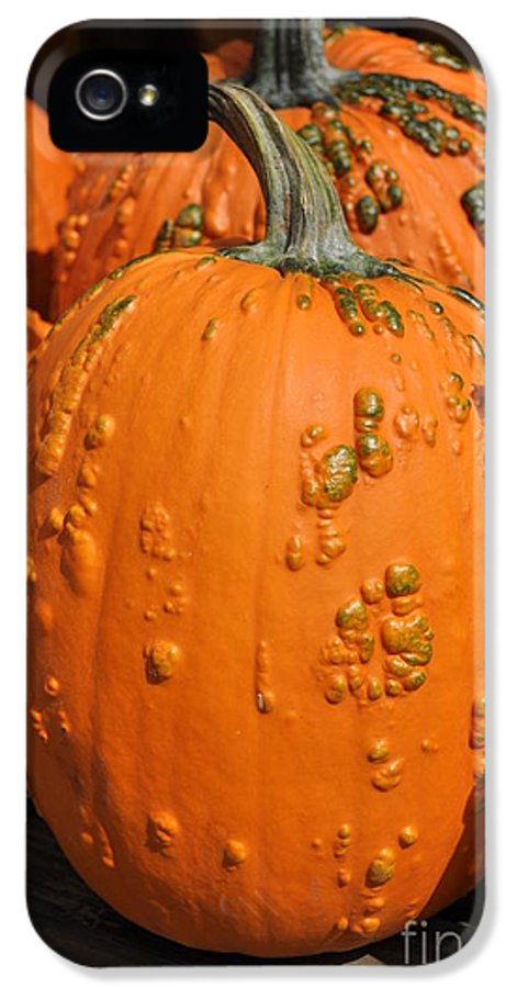 Pumpkin IPhone 5 Case featuring the photograph Pumpkinville by Luke Moore