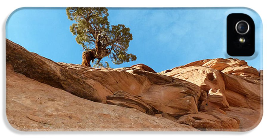 Juniper IPhone 5 / 5s Case featuring the photograph Reaching For The Sun by Bob and Nancy Kendrick