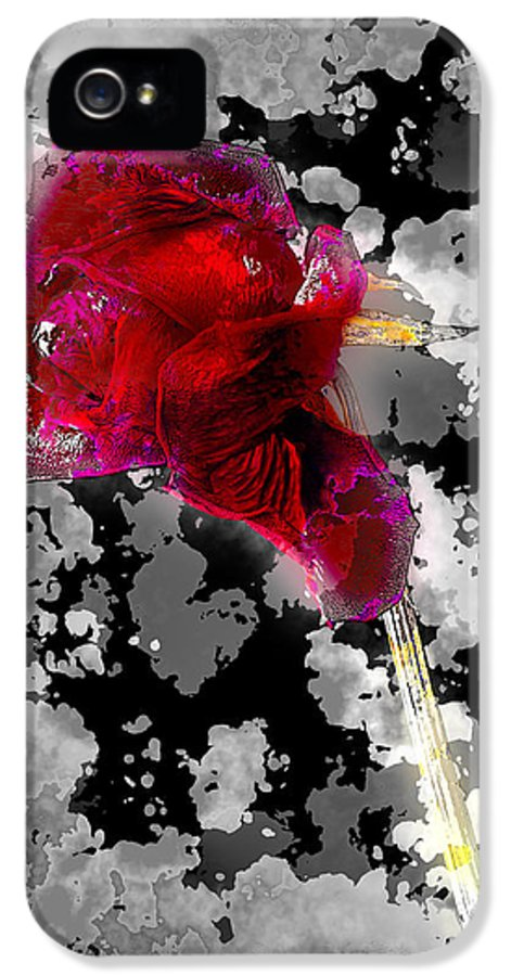 Art IPhone 5 Case featuring the pyrography Rose by Mauro Celotti