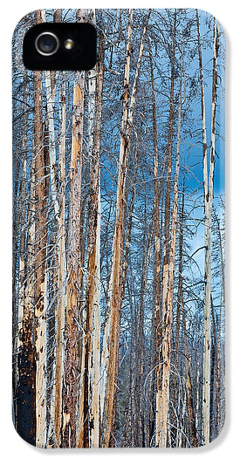 Pine IPhone 5 Case featuring the photograph Scarred Pines Yellowstone by Steve Gadomski