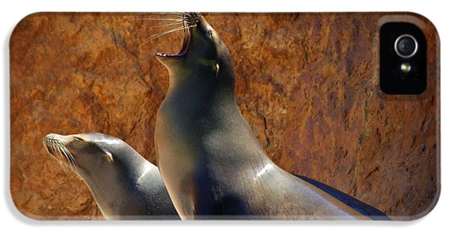 Animal IPhone 5 Case featuring the photograph Sea Lions by Carlos Caetano