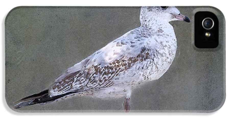 Seagull IPhone 5 Case featuring the photograph Seagull by Betty LaRue