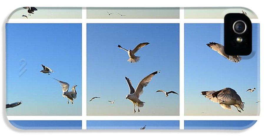 Seagull IPhone 5 Case featuring the photograph Seagull Collage 2 by Michelle Calkins