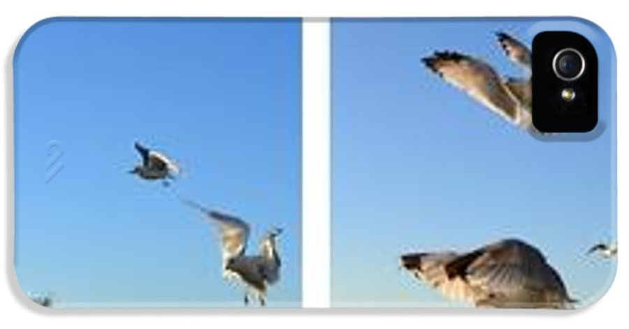 Seagull IPhone 5 Case featuring the photograph Seagull Collage by Michelle Calkins