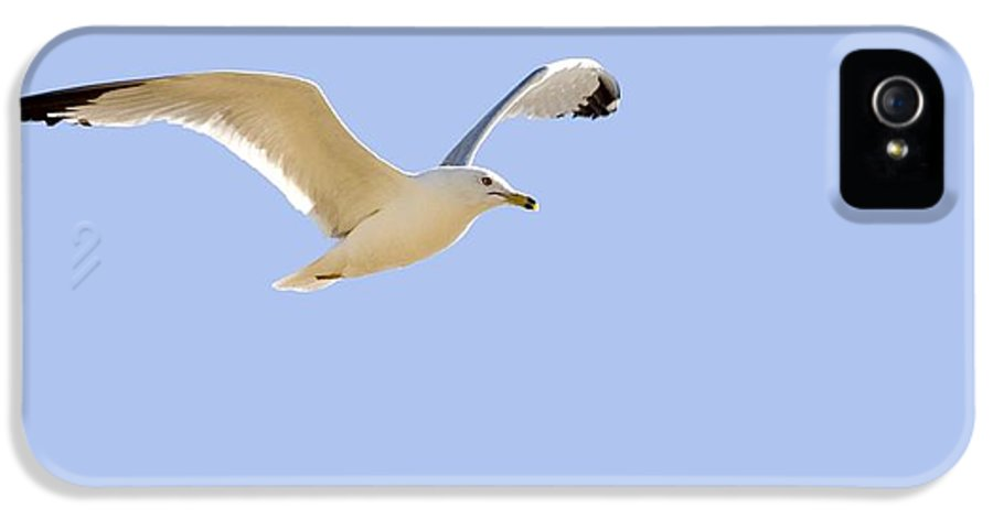 Horizontal IPhone 5 Case featuring the photograph Seagull In Flight by Don Hammond