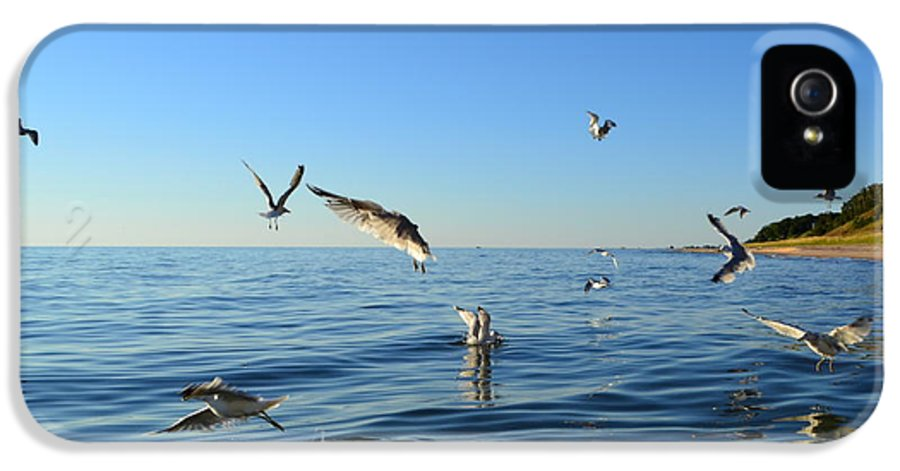 Lake Michigan IPhone 5 Case featuring the photograph Seagulls Over Lake Michigan by Michelle Calkins