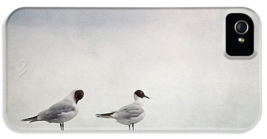 Birds IPhone 5 Case featuring the photograph Seagulls by Priska Wettstein