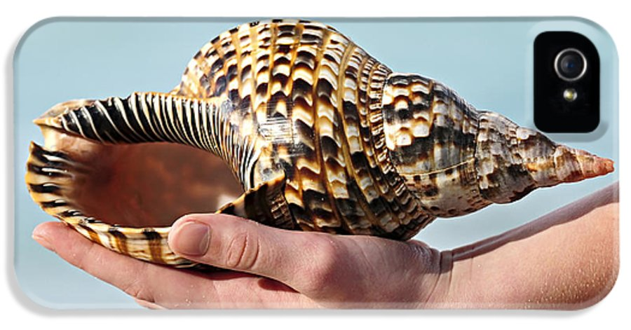 Seashell IPhone 5 Case featuring the photograph Seashell In Hand by Elena Elisseeva