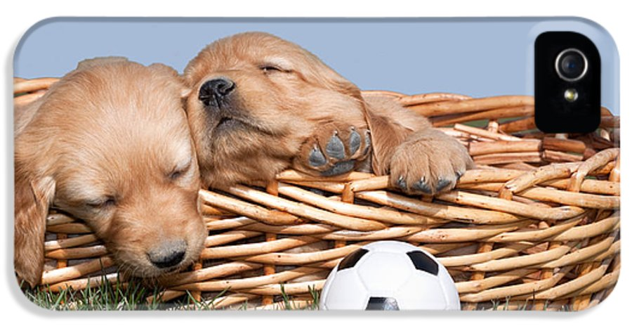 Dogs IPhone 5 Case featuring the photograph Sleeping Puppies In Basket And Toy Ball by Cindy Singleton