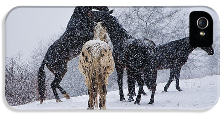 Horse IPhone 5 Case featuring the photograph Snow Day I by Betsy Knapp
