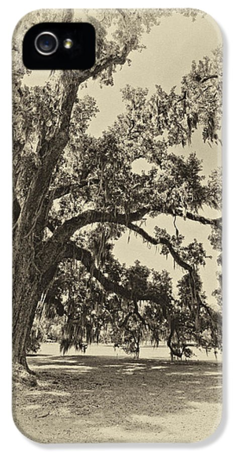 Evergreen Plantation IPhone 5 Case featuring the photograph Southern Comfort Sepia by Steve Harrington