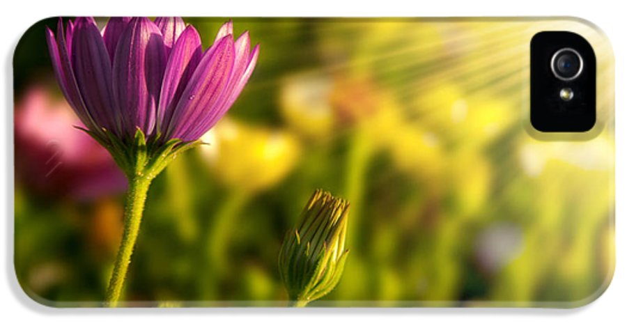 Agriculture IPhone 5 Case featuring the photograph Spring Flower by Carlos Caetano
