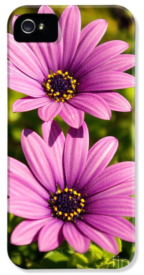 Agriculture IPhone 5 Case featuring the photograph Spring Flowers by Carlos Caetano