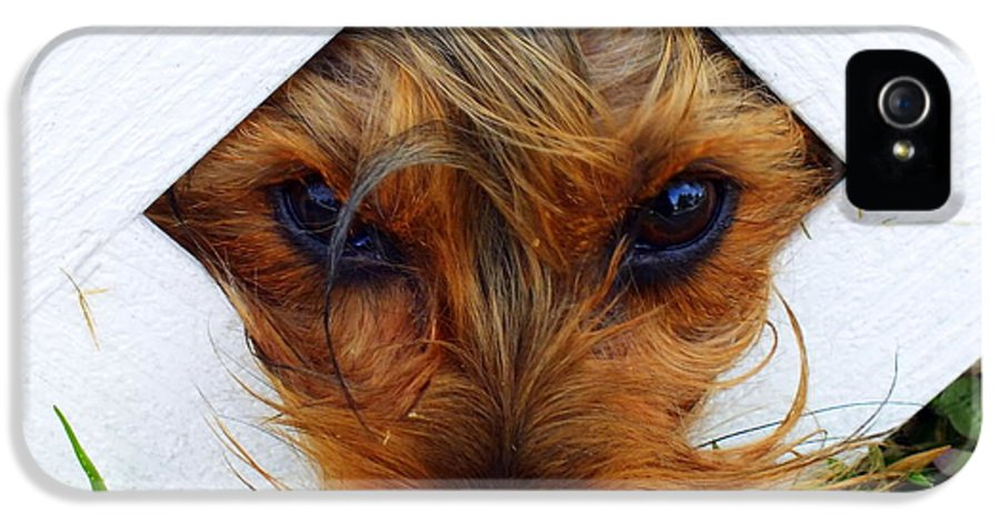 Dogs IPhone 5 Case featuring the photograph Stuck On You by Karen Wiles