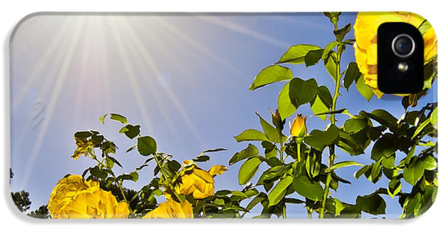 Sunflare IPhone 5 Case featuring the photograph Sunflare And Yellow Roses by Amber Flowers