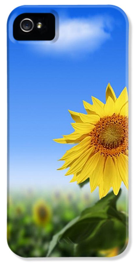 Sunflower IPhone 5 Case featuring the photograph Sunflowers, Artwork by Victor Habbick Visions