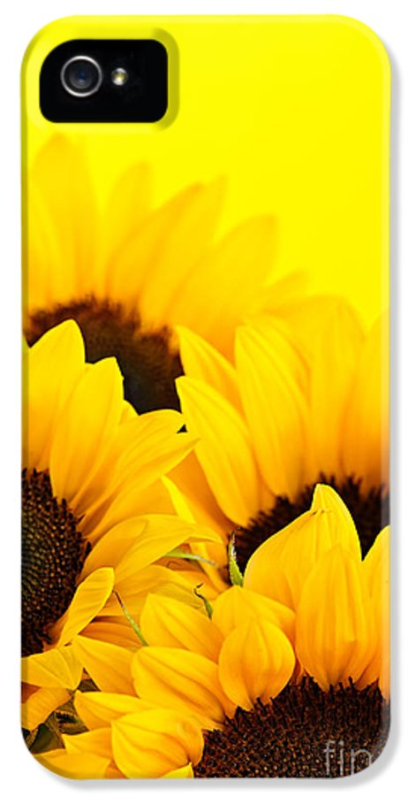 Sunflowers IPhone 5 Case featuring the photograph Sunflowers by Elena Elisseeva
